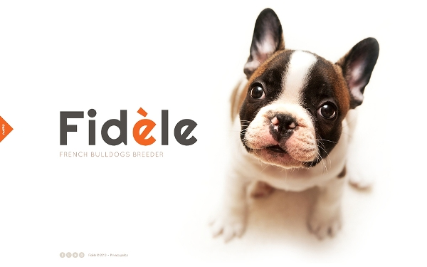 Your Pet Responsive Template